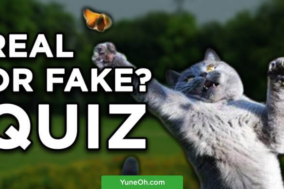 Real or Fake? Take the quiz!