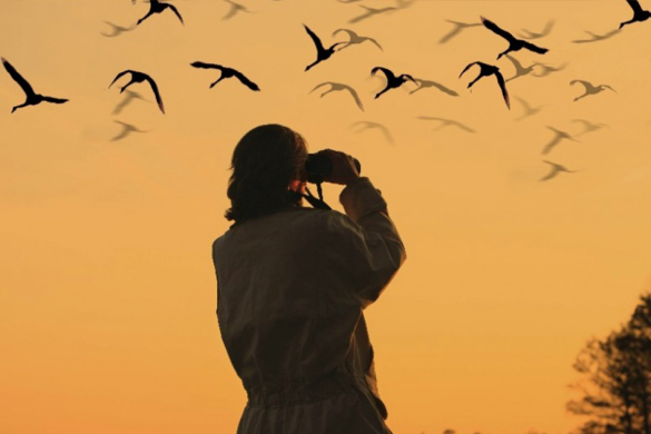 Birdwatching: A New Hobby for Chinese New Year