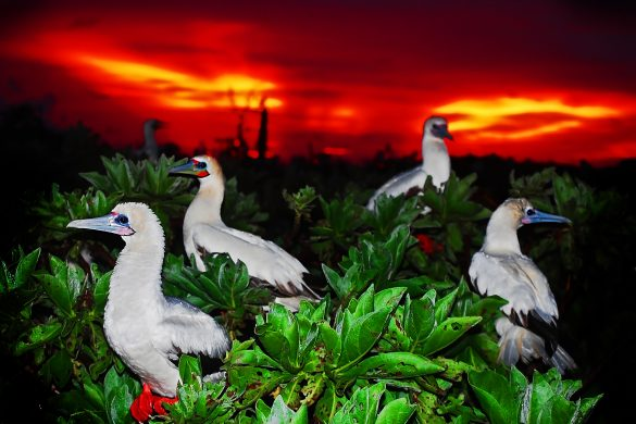 Sunset with Seabirds